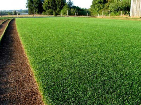 Засухоустойчив газон