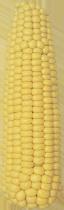 Семена кукурузы Товтрянский 188 СВ