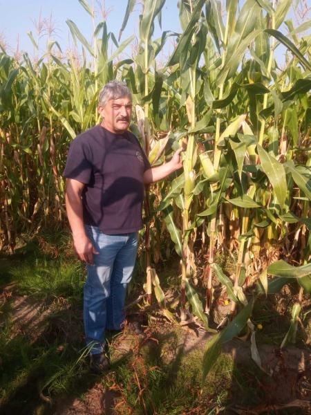 Гибрид кукурузы Хотин