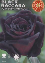 Саженцы роз Black Baccara