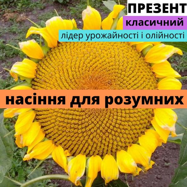 Семена подсолнечника гибрид Презент F1
