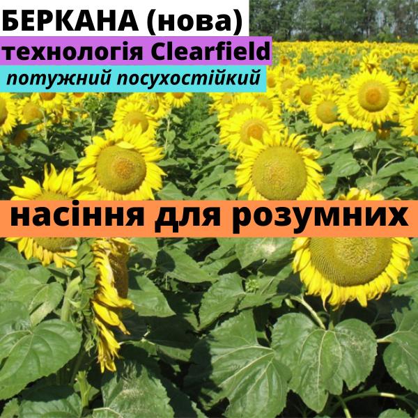 Семена подсолнечника гибрид Торук F1