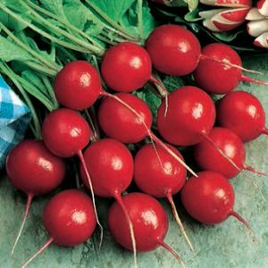 Семена редиса Диего F1 25000 сем (3,4-3,6 мм)
