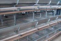Клеточное оборудования для выращивания промышленного стада кур-несушек
