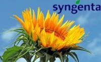 НК Армони семена Syngenta