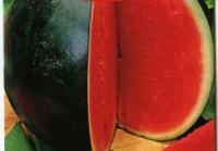 Семена арбуза Огонек