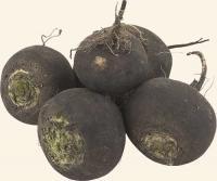 Семена редьки черной