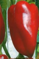 Семена перца Подарок Молдовы