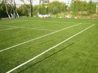Семена травы газонной Спортивный газон
