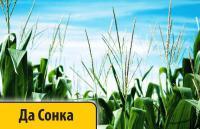 Семена кукурузы Дау Сидс Да Сонка Daw Seeds