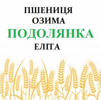 Пшеница озимая Подолянка элита