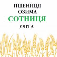 Семена озимой пшеницы Сотниця элита