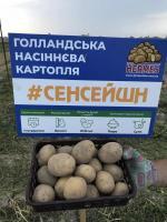 Картофель Сенсация ультроранний 1 репродукция сетка 5 кг