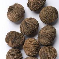 Орех черный, 2-хлетние саженцы