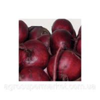 Шот Топ семена свеклы столовой окр. (Hazera) 1кг