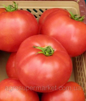 Семена томат Элегро F1. Семинис.
