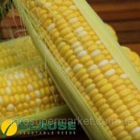 Семена РАКЕЛЬ F1 / RAKEL F1 - Кукуруза Сахарная суперсладкая, Clause 5000 семян