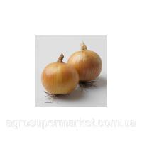 Вольф F1 семена лука репчатого озимого (Hazera)