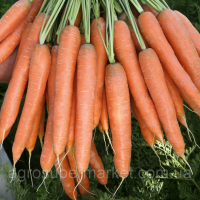 Семена моркови Аттилио F1 100000 шт