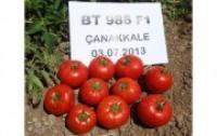 Семена томата BT 986 F1, суперранний, 1000 семян BT TOHUM