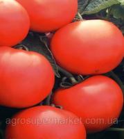 Семена томата Дебют