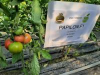 Семена розовый томат папилон F1 (PAPILON F1) Супер ранний, MRTOHUM Турция 500СЕМЯН