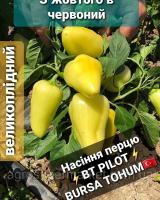 Семена перца сорта Полет - BT PILOT F1 Оригинал Bursa Tohum 50 г 10гр