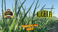 ALASKA F1 ОЗИМОЙ ЛУК 65TON/ГА MRT SEEDS