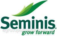 Семена Капусты Тобия F1 (Tobia F1) 2500 семян Seminis