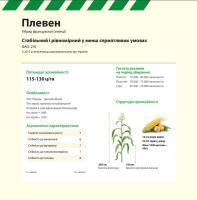 Семена кукурузы  ПЛЕВЕН Maisadour Semences (МАИСАДУР СЕМАНС)