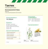 Семена кукурузы ТАКТИК Maisadour Semences (МАИСАДУР СЕМАНС)