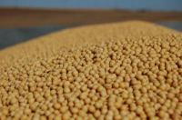 Семена американской сои сорта Apollo (Аполло), устойчивого к гербициду