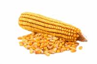 Семена кукурузы Соколов 407МВ