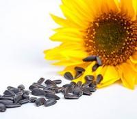 Семена подсолнечника onyx N5LM307 кондитерский Clearfield-гибрид; (Nuseed США)