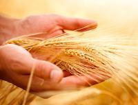 ООО  Хлеб Экспорт логотип