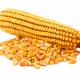 Гибрид ДН Аншлаг ФАО 420 семена кукурузы, АПК Маис