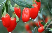 Плодово ягодные культуры