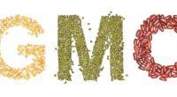 Определение ГМО