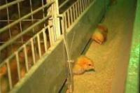 Клетка для содержания цыплят КЦ-4