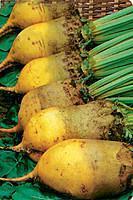Семена свеклы кормовой Урсус Поли, желтая 20 кг Malopolska Hodowla Roslin