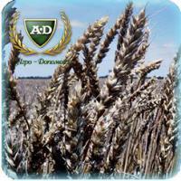 Пшеница озимая Кольчуга Супер Элита