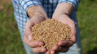 Шафа сушильна лабораторна або вологомір зерна? Що обрати?