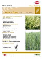 Канадська озима пшениця АВА