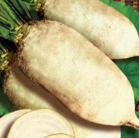 Семена кормового буряка (свеклы) Польского и Украинского