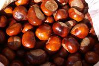 Плоды каштана конского и желудя в больших количествах