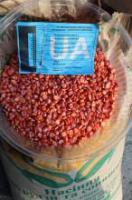 Гибрид кукурузы Солонянский 298 СВ