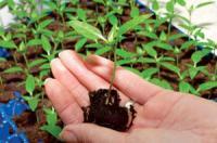Управление стрессами растений