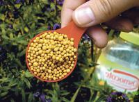 Чим краще «годувати» рослини Мінеральні добрива та їхнє застосування ще раз про головне