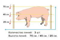 Электропастух для свиней (комплект)