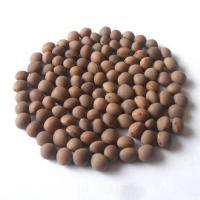 Семена вики яровой Лила элита 1 репродукция